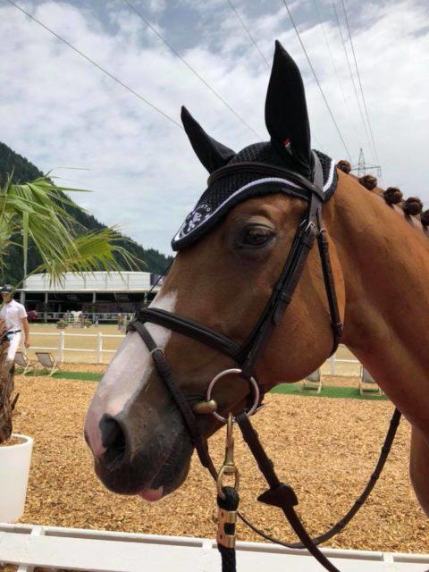 Mevisto-Reiter Roland Englbrecht zeigte sich mit der Leistung seiner Pferde im GLOCK HORSE PERFORMANCE CENTER sehr zufrieden. © Barbara Hubner