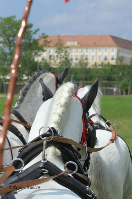 Impressionen von der NÖ Landesmeisterschaft der Vierspänner auf Schloss Hof. ® Regina Fabian