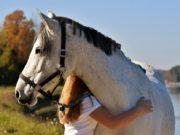 Darf ich durch, ich muss zum Pferd!? ©pixabay