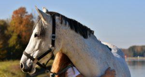 Was gibt dir persönlich deine Pferde-Zeit und bildet damit die grundlegende Motivation hinter deinem Tun? © pixabay