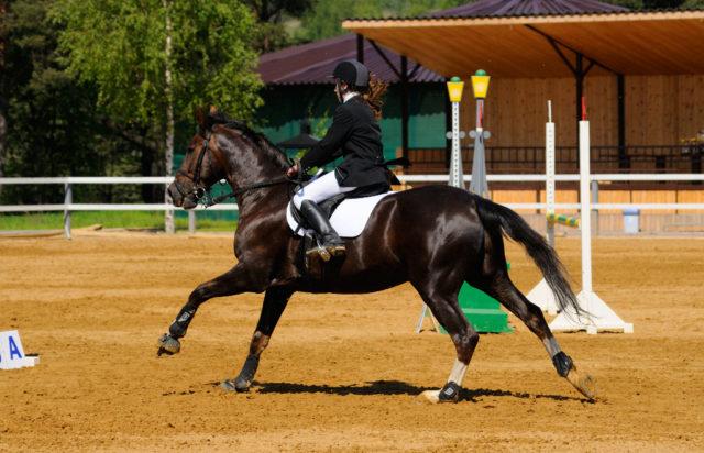 Wer sich schnelle Erfolge verspricht ist im Pferdesport meist genauso schnell am Boden der Tatsachen. © Shutterstock | Abramova Kseniya