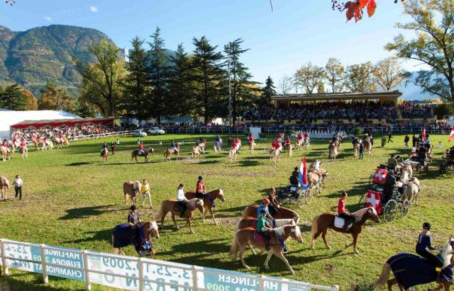 Ungefähr 370 Starter mit rund 330 Pferden aus 13 verschiedenen Nationen werden beim Haflinger Europachampionat 2018 um 20 Championatstitel. © Haflinger Europachampionat 2018