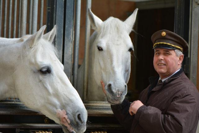 Die Spanische Hofreitschule Sucht Einen Stallmeister Equestrian