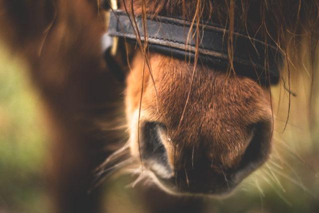 Auch von deinem Pferd erwartest du volle Konzentration. Und zwar nur auf dich, oder nicht? © pexels