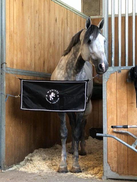 Mevisto's Corwinni fühlte sich wohl im Pferdesportpark Magna Racino und sprang unter Mevisto-Reiter Roland Englbrecht auf Platz 2 im Racino Grand Prix. © Facebook Barbara Hubner