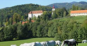Das Lipizzanergestüt Piber in der Steiermark sucht eine/n Gestütsmeister/in. © SRS