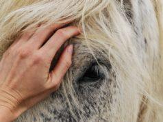Die Verbindung zu unseren Pferden sollten wir auch im Sattel niemals verlieren. © pexels
