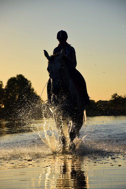 In einem Punkt sind wir uns wohl alle einig: Das Glück der Erde, liegt auf dem Rücken der Pferde. © pexels