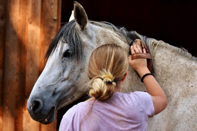 Gerade noch dein Pferd gestriegelt und schon klingelt dein Handy erneut. © pixabay