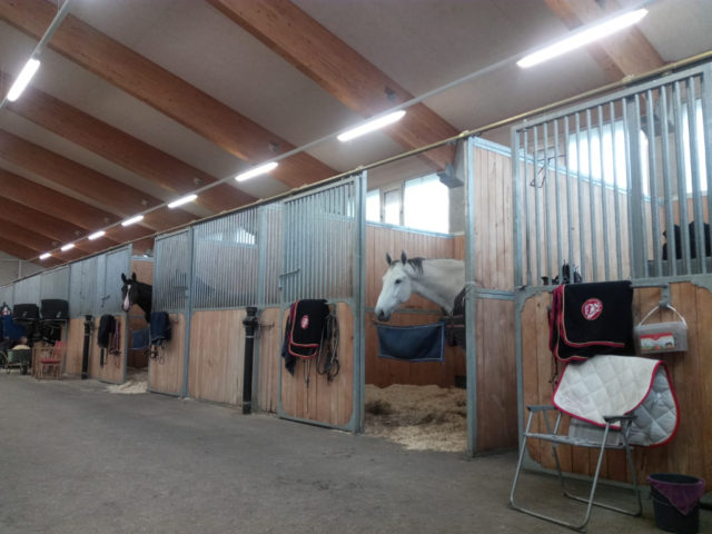 Die Pferde von Matthias Raisch fühlen sich wohl im Magna Racino. © privat