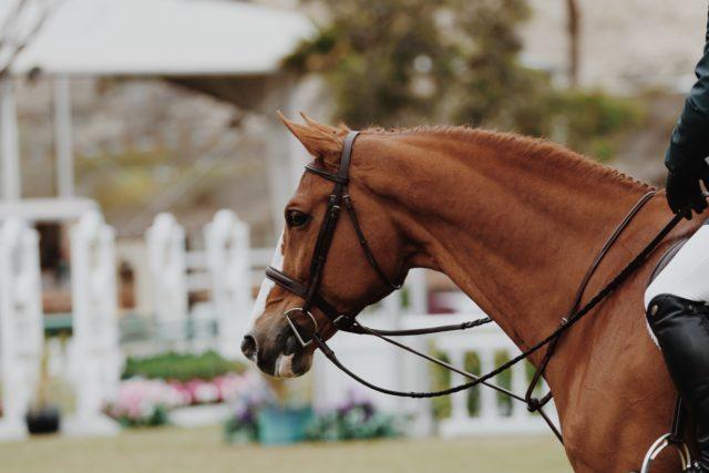 Wenn sich Misserfolge häufen sind auch Pferdesportler vor depressiven Verstimmungen nicht gefeit. © pexels