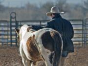 Auch Zeit, die du mit deinem Pferd verbringst ohne eine Leistung von dir oder dem Tier zu verlangen kann gute Gefühle auslösen. © pexels