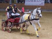 Die traditionellen Show-Parade der Lambacher Pferdewirte findet heuer am 07. April 2019 um 14.00 Uhr im Pferdezentrum Stadl-Paura statt. © Gosterer