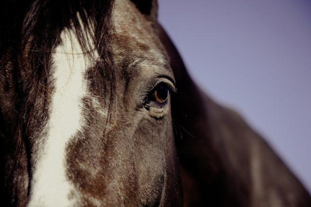 Zeit mit den Pferden in Ruhe kann als Strategie dienen, um wieder zu sich und seinen Stärken zu finden. © pexels