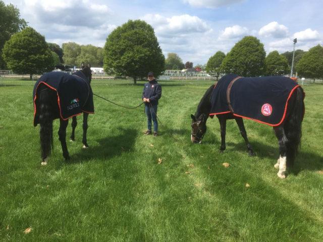 Wohlverdiente Pause für die Pferde. © Sportpferde Blumschein