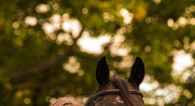Auf die eigenen Leistungen und den ganz individuellen Weg stolz zu sein ist eine wichtige Eigenschaft, die erfolgreiche Reiter an sich finden sollten © pexels
