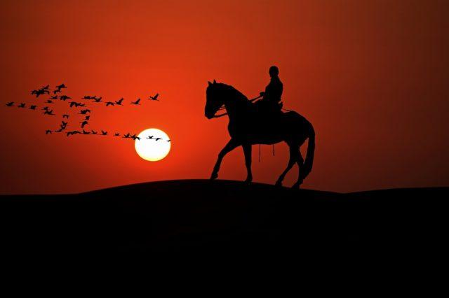Eine gute Verbindung zwischen Pferd und Reiter ist nicht nur für den Wettkampf wichtig. © pixabay