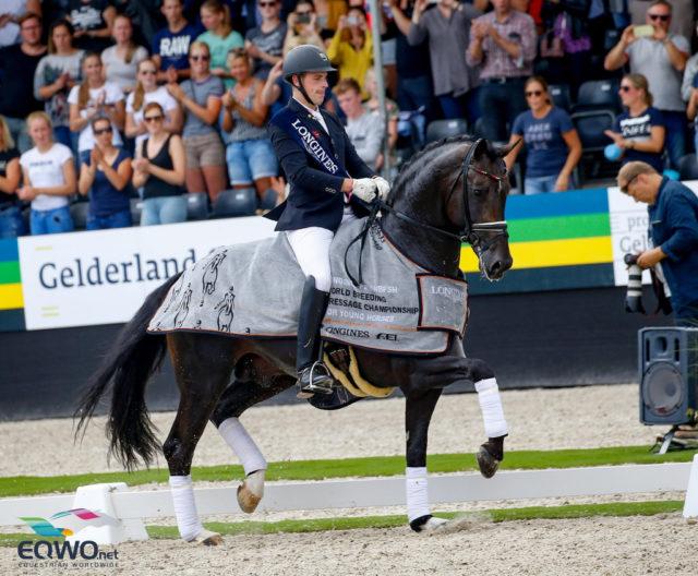 Der Oldenburger Prämienhengst Zucchero OLD (GLOCK's Zonik N.O.P. x Prince Thatch XX) wurde heute unter Fredric Wandres (GER) Weltmeister der sechsjährigen Dressurpferde. © Petra Kerschbaum