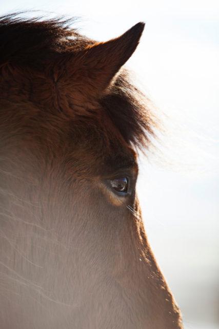 Der Panoramablick ist besonders wichtig, damit nicht nur die Pferde alles um sich herum im Blick haben. © Revolt | Unsplash