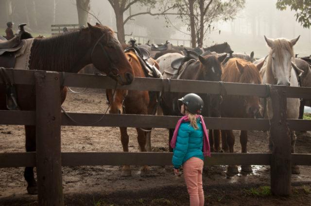 Kopf hoch! Ob auf dem Pferd oder daneben. Schließlich gibt es mit den tierischen Begleitern viel zu entdecken! © Melanie Dretvic | unsplash