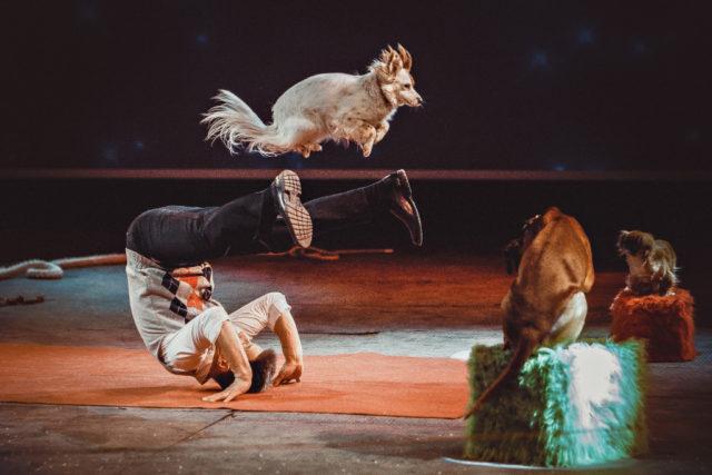 """Für die """"Amadeus Showtime"""" 500 Hunde werden in Salzburg dieses Jahr erwartet! ©ZVG"""