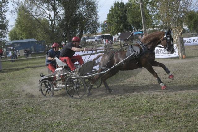 Steendieks Perfect Mind und Erich Pürstinger galoppierten zu Platz 3 im Marathon bei der WM der Pony-Einspänner. © Andreas König