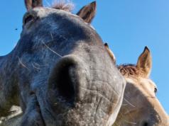 Bitte alle mitmachen! Aktuell läuft eine Studie zum Flow Erleben im Pferdesport © Wolfgang Hasselmann