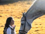 Weil der Kopf mitentscheidet - Mentales Training im Pferdesport © Anouska Haantjes | Pexels