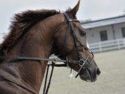 Angst überträgt sich nur zu leicht auf den Sportpartner Pferd © Violeta Pencheva | unsplash