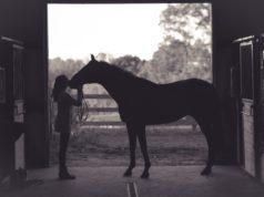 Der eigene Weg im Einklang mit dem Pferd ist das, was am Ende zählt. © Kenny Webster   unsplash