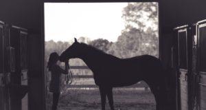 Der eigene Weg im Einklang mit dem Pferd ist das, was am Ende zählt. © Kenny Webster | unsplash