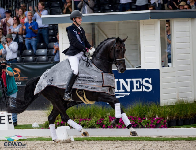 Weltmeister und Bundeschampion Zucchero OLD verstarb an den Folgen eines Hodenbruchs. © Petra Kerschbaum