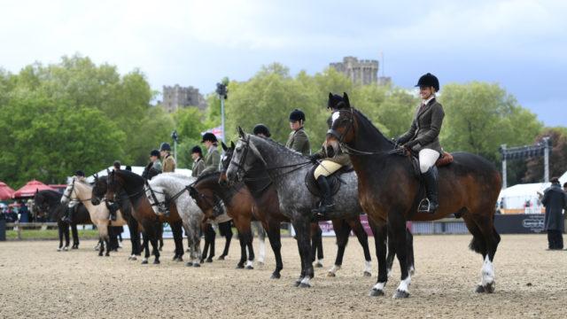 So wird die diesjährige Royal Windsor Horse Show nicht stattfinden. 2020 werden Teilnehmer und Aussteller sich virtuell präsentieren können. © Virtual Windsor 2020