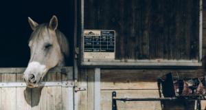 Pläne und ein Zeitmanagement dürfen im Stallalltag nicht zu kurz kommen ©Anna Kaminova | unsplash