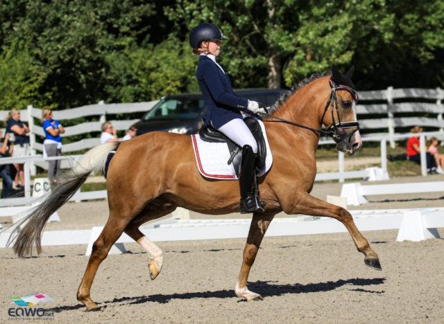 Top-Rund für Florentina Jöbstl (ST) und Colourfull Cannonball! Über 73% scorte das Paar in der Pony-Team-Wertung, und verhalf Österreich zu rang fünf! © Petra Kerschbaum