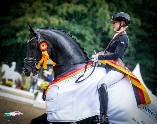 Secret von Sezuan wurde unter dem Sattel von Jessica Lynn Thomas (SWE) mit einer Note von 9,0 Bundeschampion der sechsjärigen Dressurpferde. © Petra Kerschbaum