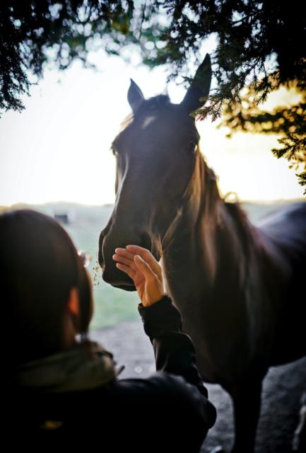 Nicht nur die eigenen, sondern auch die Stärken der Pferde sind immer wieder wichtig zu erinnern! ©Fidel Fernando | unsplash