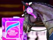 Isabell Werth, Dorothee Schneider, Victoria Max-Theurer sind nur einige der Dressurstars bei den Amadeus Horse Indoors 2020! © Daniel Kaiser