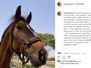 """Patrik Kittel (SWE) musste in Doha zurückziehen, nachdem er erfuhr, dass """"Welly"""" möglicherweise kontaminiertes Futter gefressen haben könnte. © IG: patrikkittel"""
