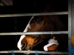 Aufgrund eines zweiten neurologisch auffälligen Pferdes in Vejer de la Frontera, musste die Sunshine Tour heute früh doch abgesagt werden. © Facebook: Sunshine Tour