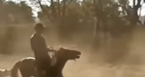 Das Video zeigt, wie Leandro Aparecido Da Silva (BRA) ein viel zu kleines Pony reitet und ihm dabei stark an den Zügeln reißt. © Youtube