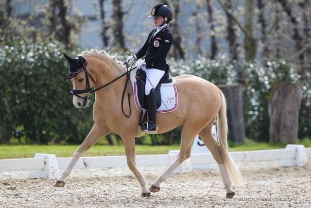 Beim CDI Sint-Truiden (BEGL) heißt es Platz elf für Fanny Jöbstl und Wilky May im Pony Team-Test! © Eurodressage