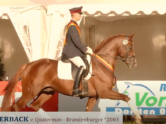 RIP Quaterback! Der Stempelhengst des brandenburgischen Haupt- & Landgestüts Neustadt/Dosse verstarb heute Vormittag an den Folgen einer Kolik. © Screenshot https://www.youtube.com/watch?v=ynVdcJphwGI