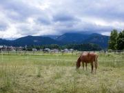 Erste österreichische Pferdeklappe: 30 Klappenboxen stehen für Pferde in Not zur Verfügung. © Österreichischer Tierschutzverein